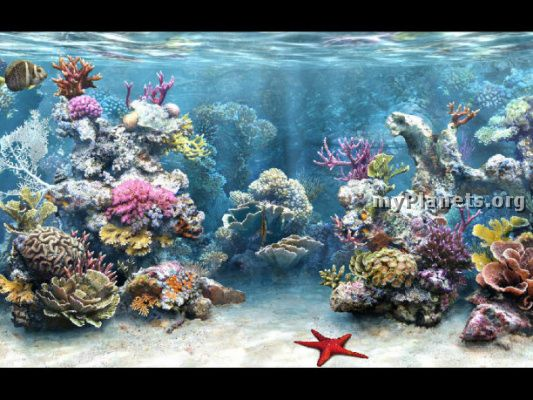 screen saver acquario